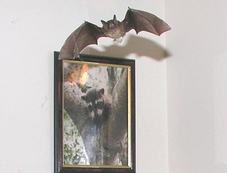 1st.Bat_picture