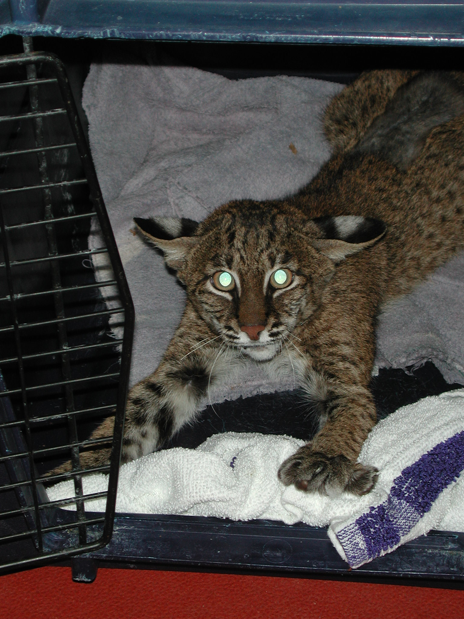 Patches Bobcat W0-7-0564 September 27005