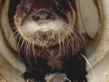 1st. Otter pictureWhiskers